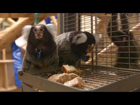 Understanding the OCD Brain part 2: Animal research at Cambridge