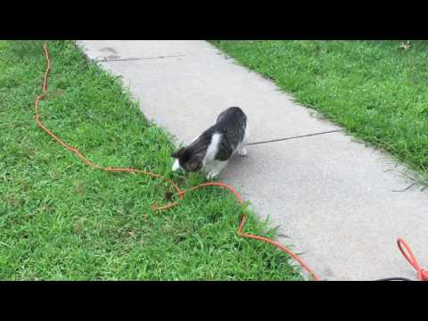 CAT AND DOG COMPILATION 2016
