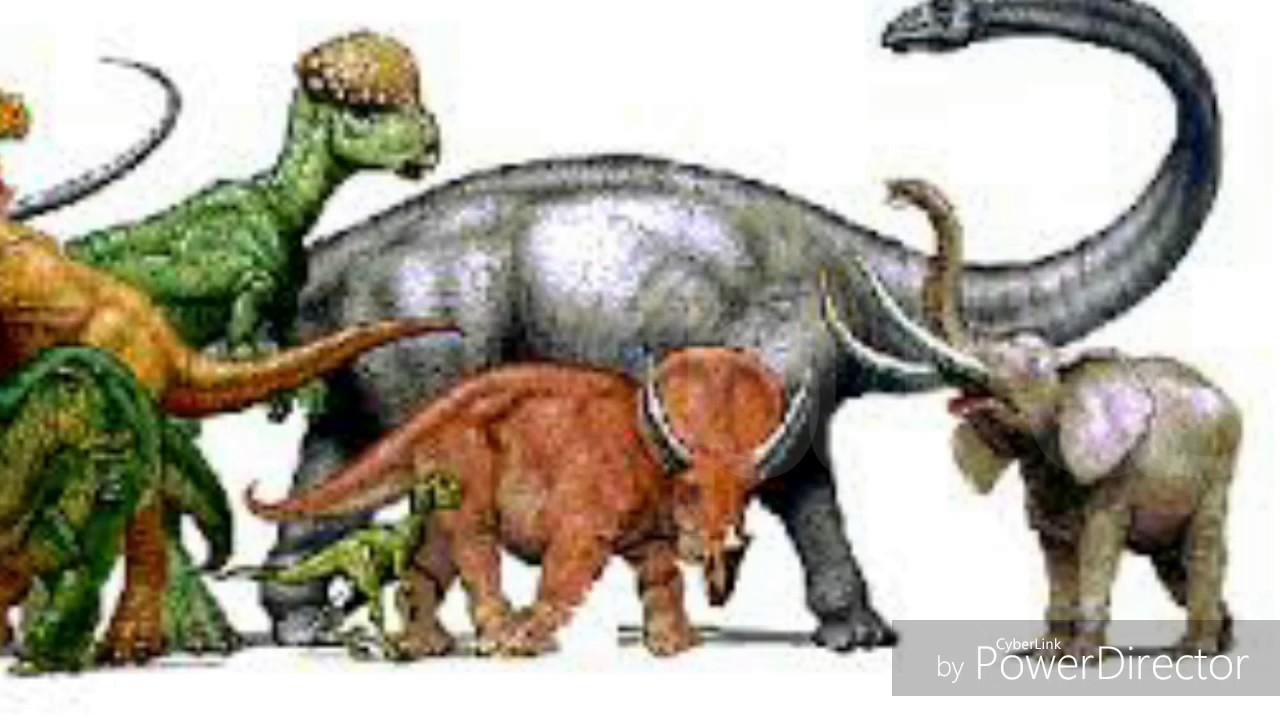 Top Dinosaurios Herbivoros Youtube Enlace a los dinosaurios herviboros. top dinosaurios herbivoros youtube