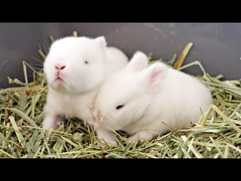 Curious Little Baby Bunnnies