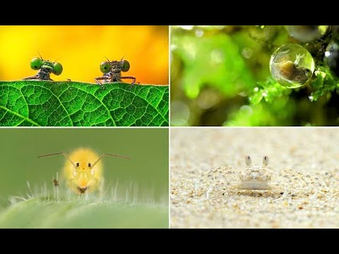Royal Society of Biology photographer of the year entries  - Travel Guide vs Booking