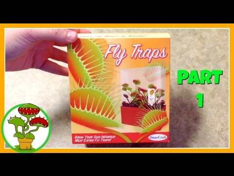 Venus Fly Traps: Part 1