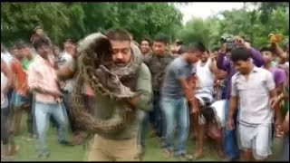 Selfie with python nearly turns fatal for ranger