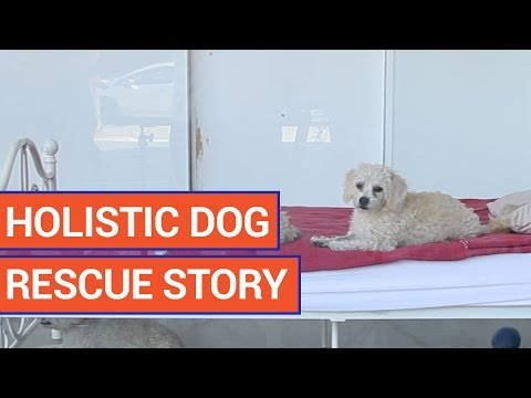 The Wylder Foundation Dog Rescue Video 2016 | Daily Heart Beat