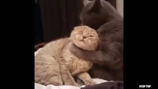 ПРИКОЛЬНЫЕ ВИДЕО | ТОП ПОДБОРКА | Funny videos | Выпуск #554
