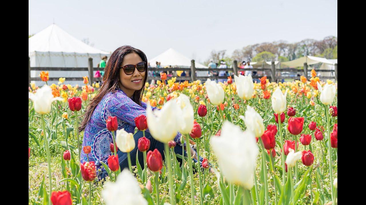 Tulip Festival Holland Michigan YouTube - Holland tulip festival
