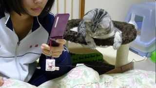 姪っ子にかまって欲しい猫 thumbnail