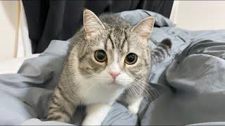 ベッドインしてから何秒で猫が来るか計ったら早すぎたw