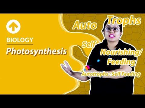 Class 10 Biology : Life Process | Photosynthesis