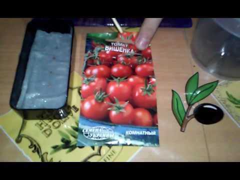 Посадка семян томата Вишенка в торф.таблетку