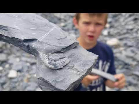 U-Dig Fossils: Trilobite Hunt