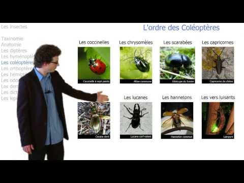 hqdefault - Insectes