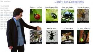 Tout savoir sur les insectes