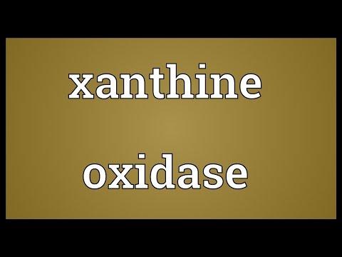 Xanthine oxidase Meaning