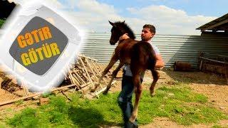 Atı çiyninə qaldırdı - Gətir-Götür