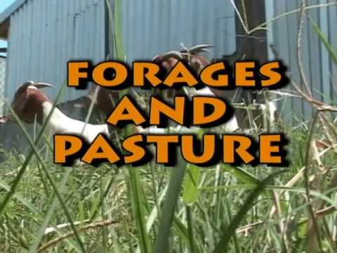 Nutrition and Forage Production for Goats