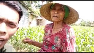 Download Video TESTIMONI - Apa Kata Nenek Ini setelah Menanam Benih Jagung Unggul Madura-3 #zakeraseed MP3 3GP MP4