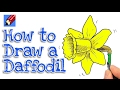 Learn how to draw a Daffodil Real Easy for kids and beginners - St David's Day