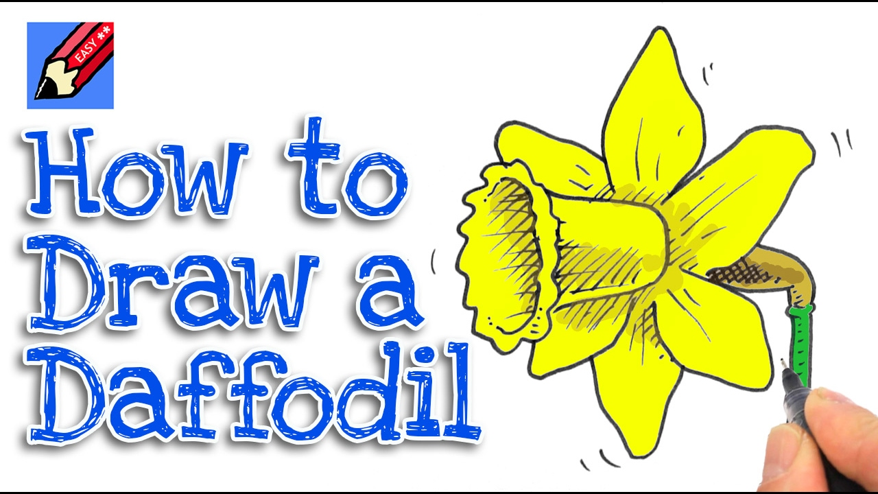 Learn How To Draw A Daffodil Real Easy Youtube