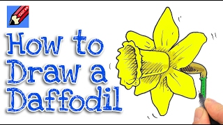 Learn how to draw a Daffodil Real Easy for kids and beginners - St David