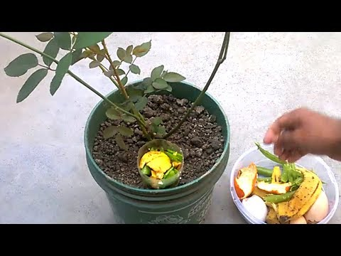 How to use organic fertilizer for any plants | Best homemade
