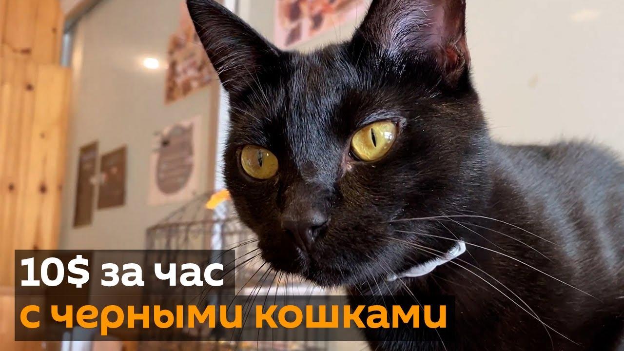 10$ за час с черными кошками: в Японии открылось котокафе