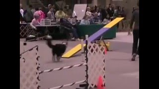 Akc Agility At The 2008 Seattle Kennel Club Dog Show