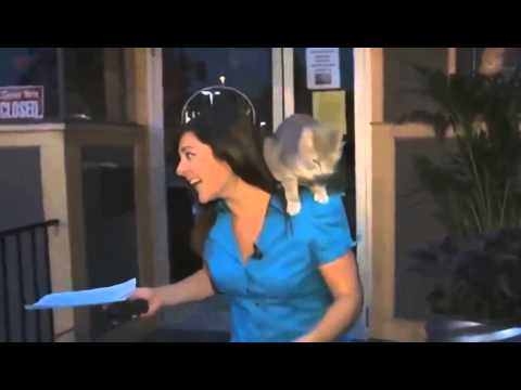 New Funny cats knocking on the door - Funny cats 1080p - Funny cats