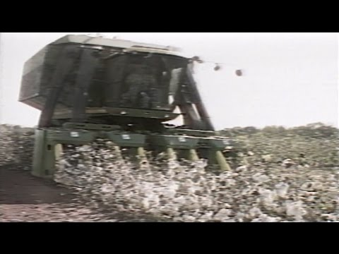 1986 Alabama Cotton Farming  - News Story
