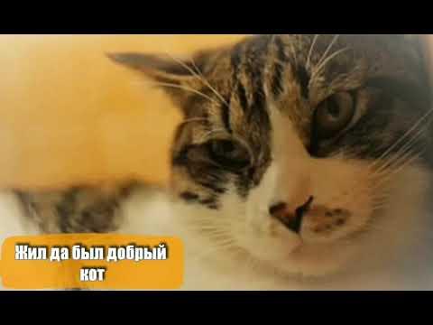 Жил да был добрый кот. Автор стихов Инна Якуш. Эвтаназия для животных, усыпить здорового кота.