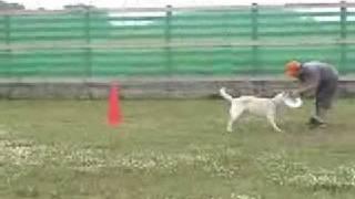 2005年6月26日(日) DOG STOCK 特設コート ディビジョン2 ディスタンス...