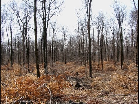 Rehabilitating Disturbed Forests