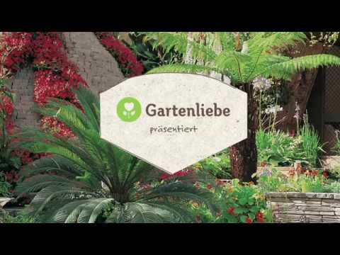 Mediterrane Pflanzen Fur Terrasse Und Balkon Youtube