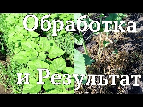 Гербицид по подсолнечнику. Обработка и результат. #СельхозТехника_ТВ №26