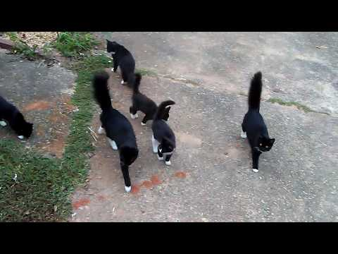 Cute Kittens Play with Family