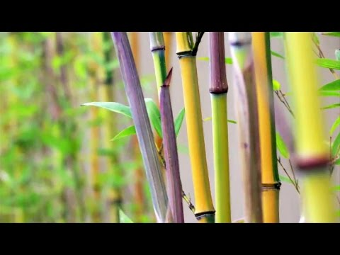 Bamboo Engineering