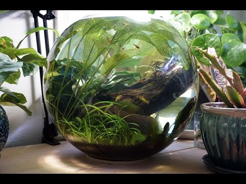 Best Fish Bowl Ever! Floral District, And DIY Planters