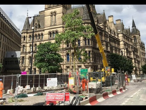 22 new trees planted in St Peter's Square