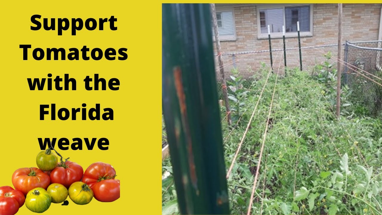 Support tomatoes with a Florida weave