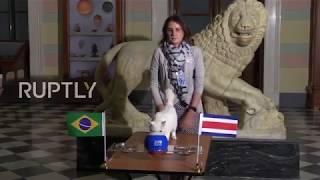 Russia: Achilles the CAT correctly predicts Brazilian WC victory over Costa Rica