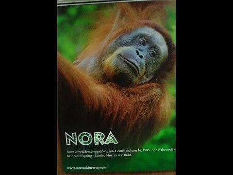 Borneo, Malaysia, Indonesia, Bali, and Singapore Seeking Orangutans - 2016