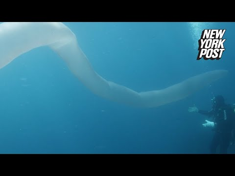 26-foot-long sea worm discovered by divers off New Zealand coast | New York Post