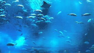 Dubai Aquarium & Underwater Zoo, The Dubai Mall (HD)