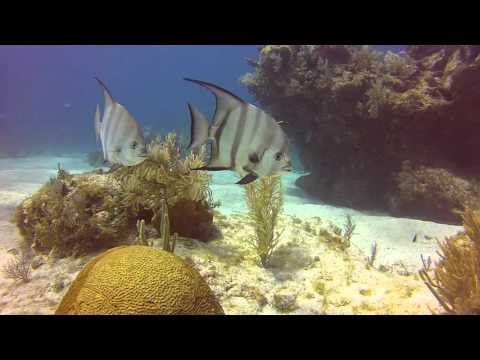 Diving Molasses reef in Key Largo. 5 8 16