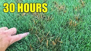 How to Kill Nutsedge in  Lawn