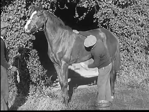 What Is One Horsepower? This Short Film Explains It All