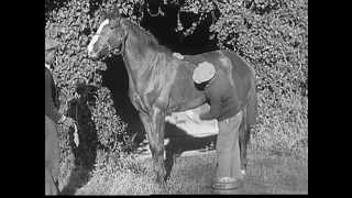 The Meaning of Horsepower (1937)