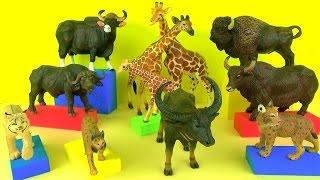 Wild Animals Bison Buffalo Yak Gaur Giraffes Lynx Kids Toys Educational