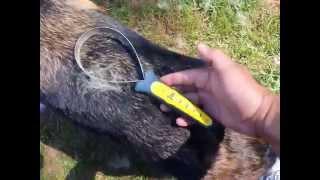 Shedding Blade On German Shepherd