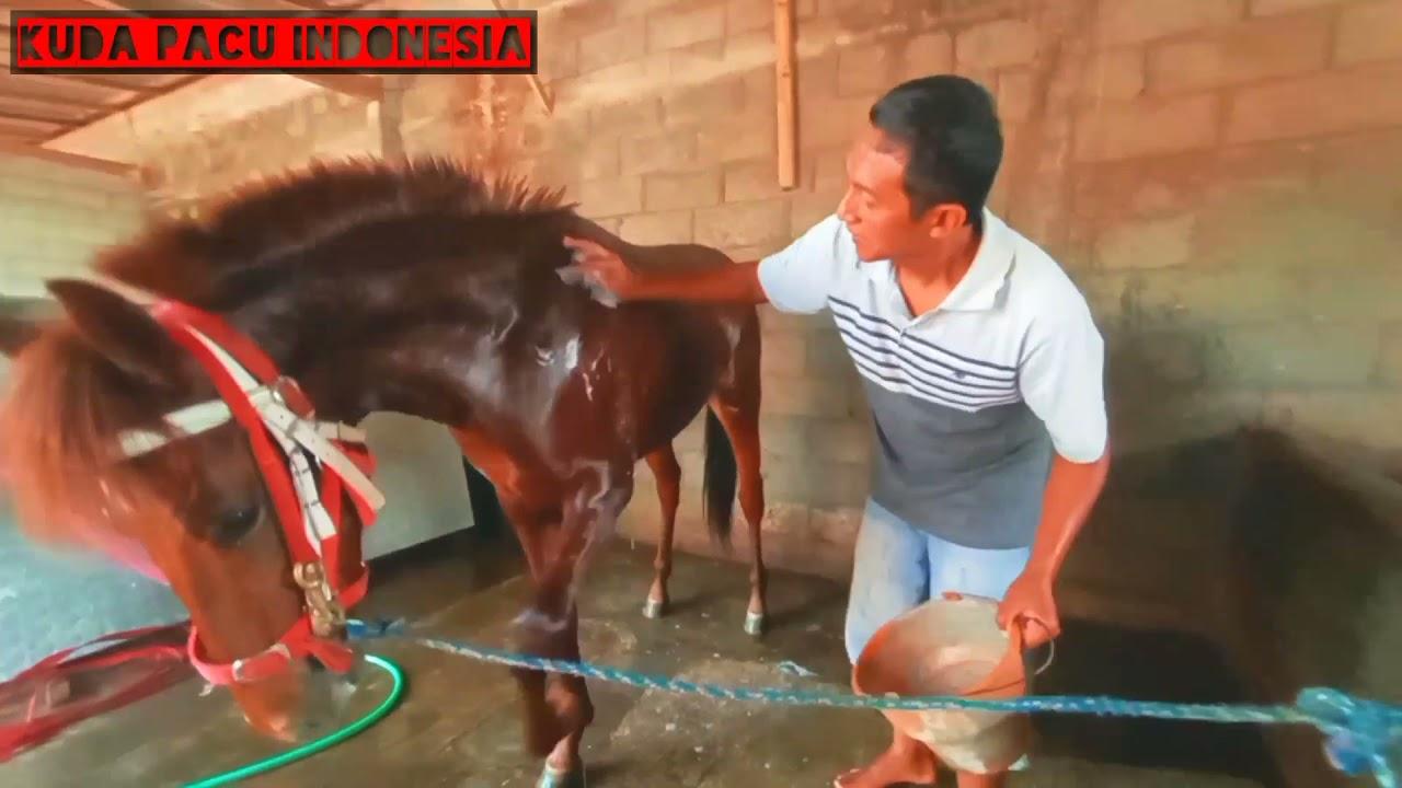 Kuda Sandel Pemilik Juragan Sapi .